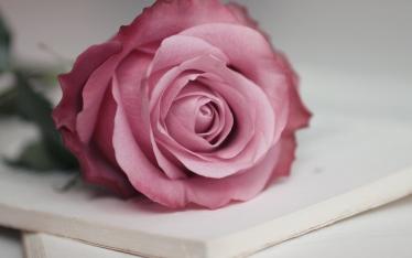 Beautiful-mybestfiles (20)